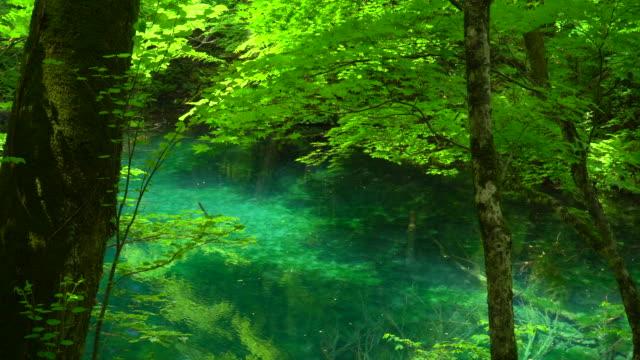 vídeos de stock, filmes e b-roll de lago verde / juniko doze lagos / wakitubonoike - shirakami sanchi