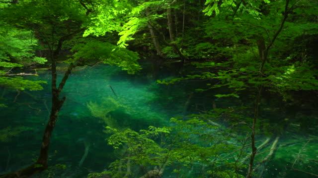 green lake / juniko twelve lakes/ wakitubonoike - aomori prefecture stock videos & royalty-free footage