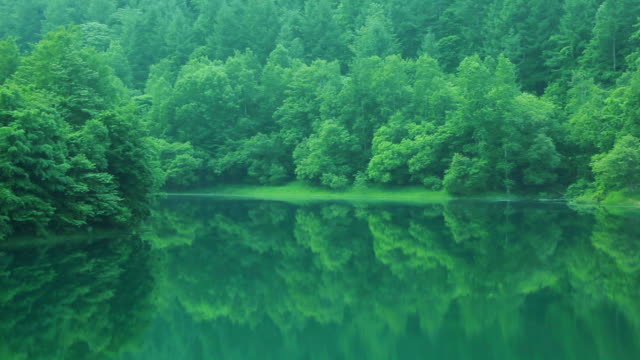 vídeos de stock, filmes e b-roll de green lake. - folhagem viçosa