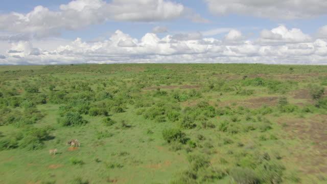 ws aerial pov green landscape / kenya - national park stock videos & royalty-free footage