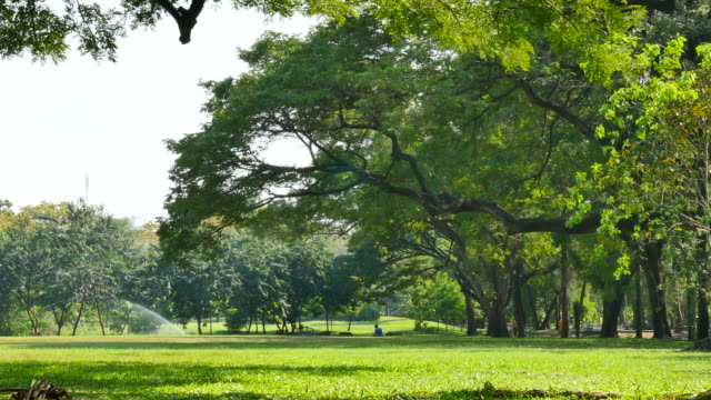 green lawn and trees in green park - coiled spring stock videos and b-roll footage