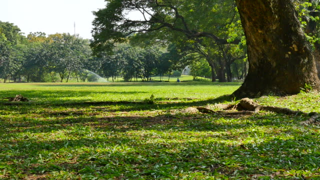 green lawn and trees in green park - meadow stock videos & royalty-free footage
