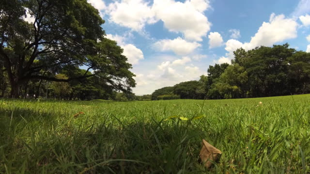green lawn and trees in green park - formal garden stock videos and b-roll footage