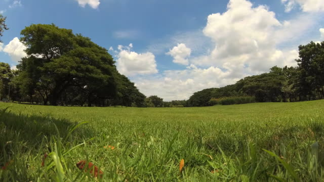 vídeos y material grabado en eventos de stock de verde césped y árboles en green park. - parque