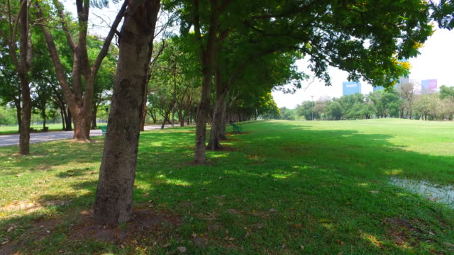 green lawn and trees in green park - dolly shot stock videos & royalty-free footage