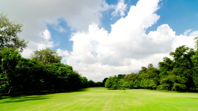 green lawn and trees with in time lapse - mowing stock videos & royalty-free footage