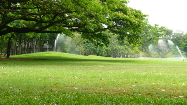 Green Lawns and Big Trees in Green Park