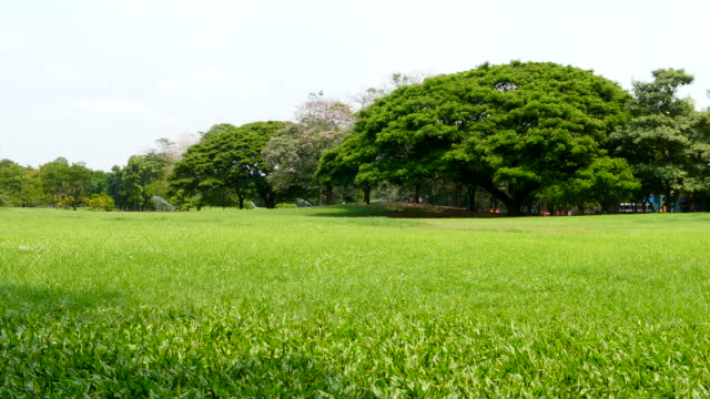 green lawns and big trees in green park - park stock videos & royalty-free footage