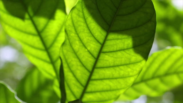 Green leaf and light