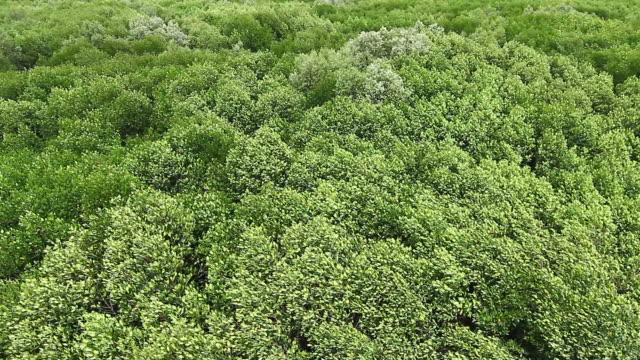 Green Blatt Hintergründe
