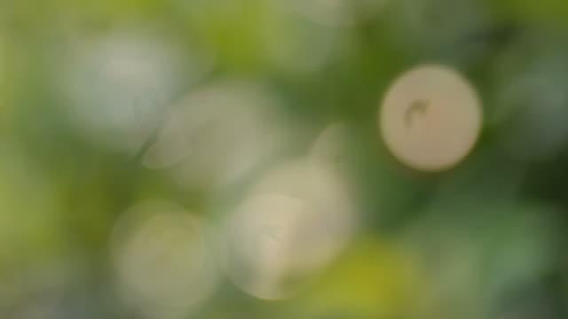 グリーンリーフボケ背景