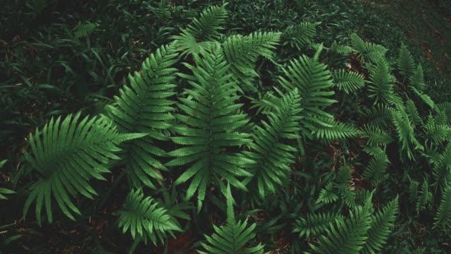 green leaf fern field - fern stock videos & royalty-free footage