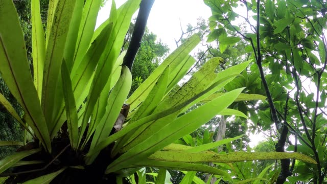 green leaf fern on tree in tropical rainforest - tree fern stock videos & royalty-free footage