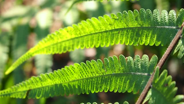 green leaf fern with sunlight - frond stock videos & royalty-free footage