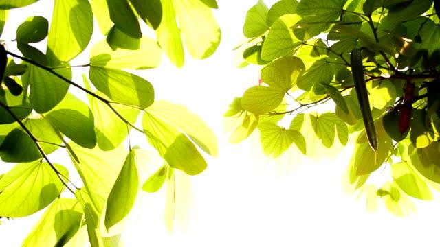 vidéos et rushes de feuille verte dans la lumière du soleil - innocence