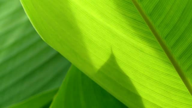 vídeos y material grabado en eventos de stock de verde hoja en el parque, bangkok - lozano