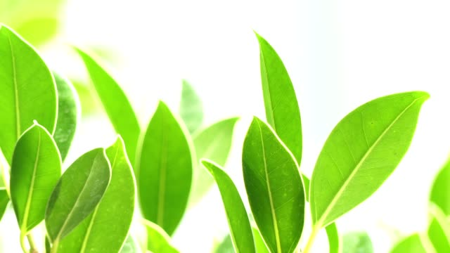 green leaf in warm sunlight - photosynthesis stock videos & royalty-free footage