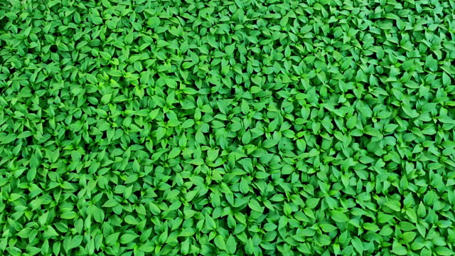 green leaf pattern background. - heaven stock videos & royalty-free footage
