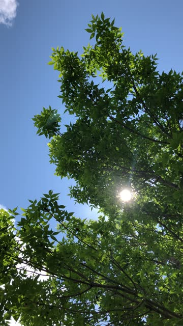 green leaf tree with sunshine - gunnison stock videos & royalty-free footage
