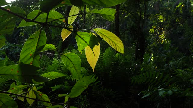 green leaf with sunlight in rainforest - named wilderness area stock videos & royalty-free footage