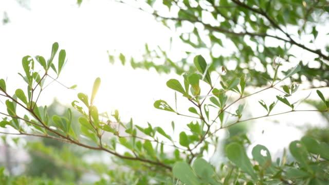 grönt löv med solljus - softfokus bildbanksvideor och videomaterial från bakom kulisserna