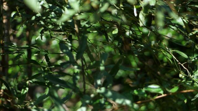vídeos de stock, filmes e b-roll de fundo de folhas verdes. - ramo parte de uma planta
