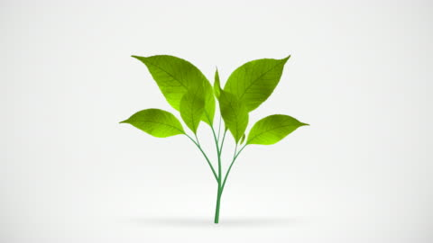 green leafs tree growing, hd - growth stock videos & royalty-free footage
