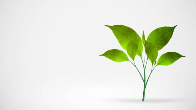 green leafs tree growing on white background - plant stem stock videos & royalty-free footage