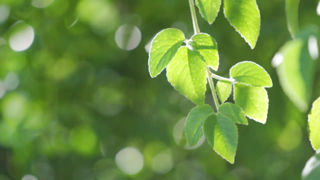 green leave in jungle - selective focus stock videos & royalty-free footage
