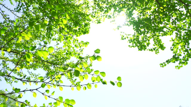 green leaves -4k- - plant part stock videos and b-roll footage