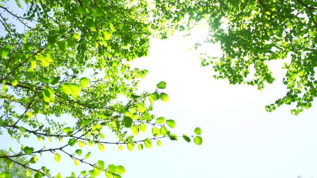 Green leaves -4K-