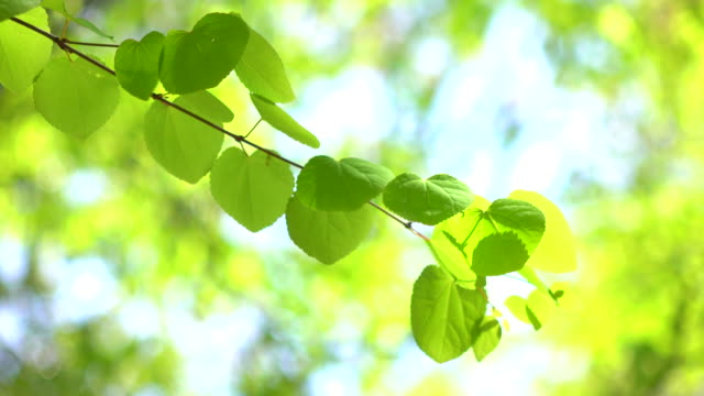 Green leaves -4K-