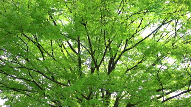 緑の葉 4 K