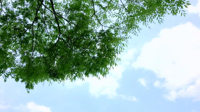 vidéos et rushes de feuilles vertes - 4 k - branche partie d'une plante