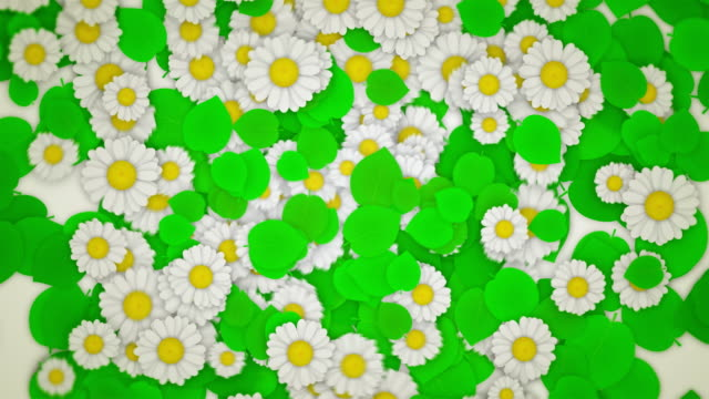 green leaves and daisies on white (horisontal pull out) - matte stock videos & royalty-free footage