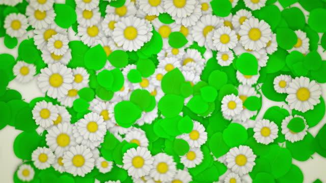 vídeos y material grabado en eventos de stock de hojas verdes y daisies en blanco (horisontal sofá - mate técnica de vídeo
