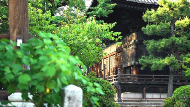 緑の葉と木造建築の日本のお寺 - 寺院点の映像素材/bロール
