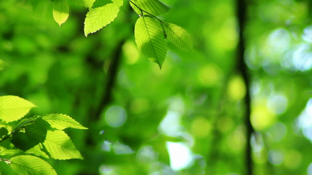 green leaves background in hd - forest stock videos & royalty-free footage