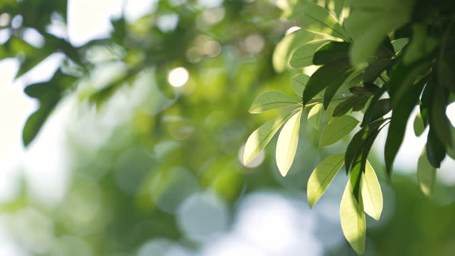 green leaves background - environmental conservation stock videos & royalty-free footage