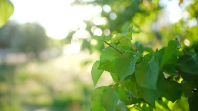 緑の葉の背景 - 枝点の映像素材/bロール