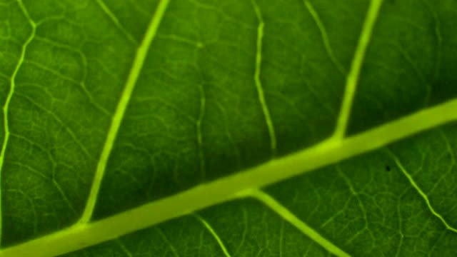 green leaves background. - macro stock videos and b-roll footage