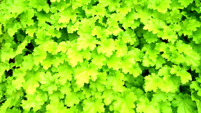 vídeos de stock, filmes e b-roll de folhas verdes de fundo  - padrão natural