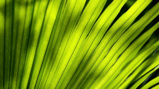 green leaves background. - lush stock videos & royalty-free footage