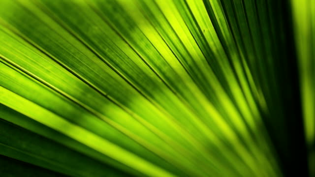 green leaves background. - fern stock videos & royalty-free footage