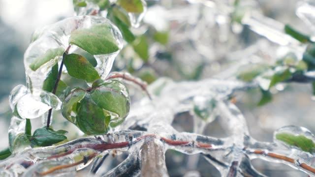 vídeos y material grabado en eventos de stock de hojas de color verde cubierto con hielo. - rama