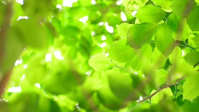 grüne blätter im rim light - klammer stock-videos und b-roll-filmmaterial
