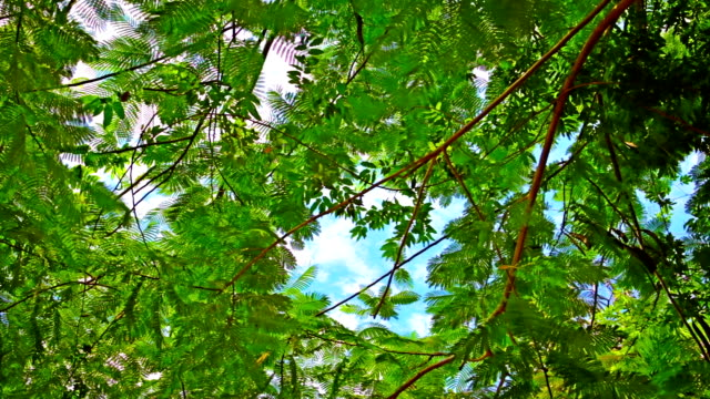 stockvideo's en b-roll-footage met green leaves in sky - back lit