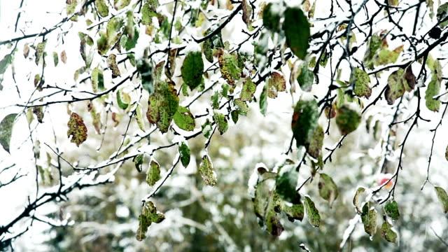 hd :緑の葉の雪 - レッドデリシャス点の映像素材/bロール