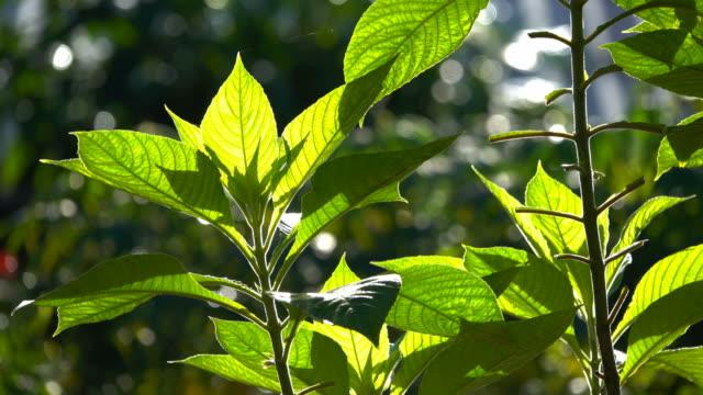 緑の葉の風と朝の太陽に対して - 枝点の映像素材/bロール