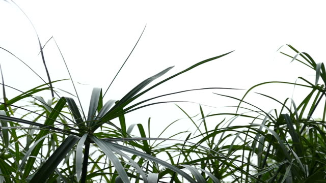 green leaves isolated on white background - composite image stock videos & royalty-free footage